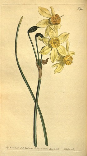 N179 w1150 curtis 39 s botanical magazine london new for Botanical tattoo london