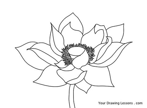 Lotus Flower Drawing A Drawing Of A Lotus Flower If You