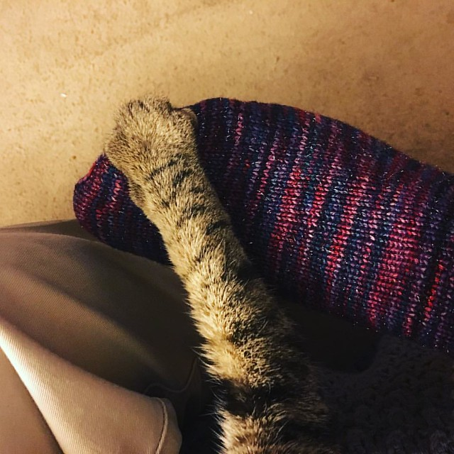 Kitten approved #operationsockdrawer #ravelry