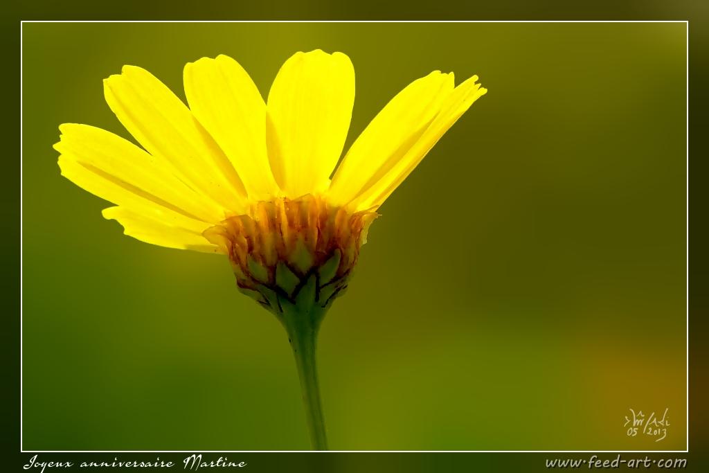 Joyeux Anniversaire Martine Rached Miladi Flickr