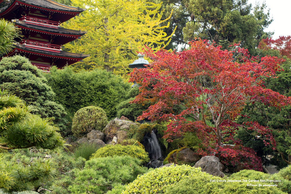 Fall Colors Japanese Tea Garden San Francisco | The fall col… | Flickr