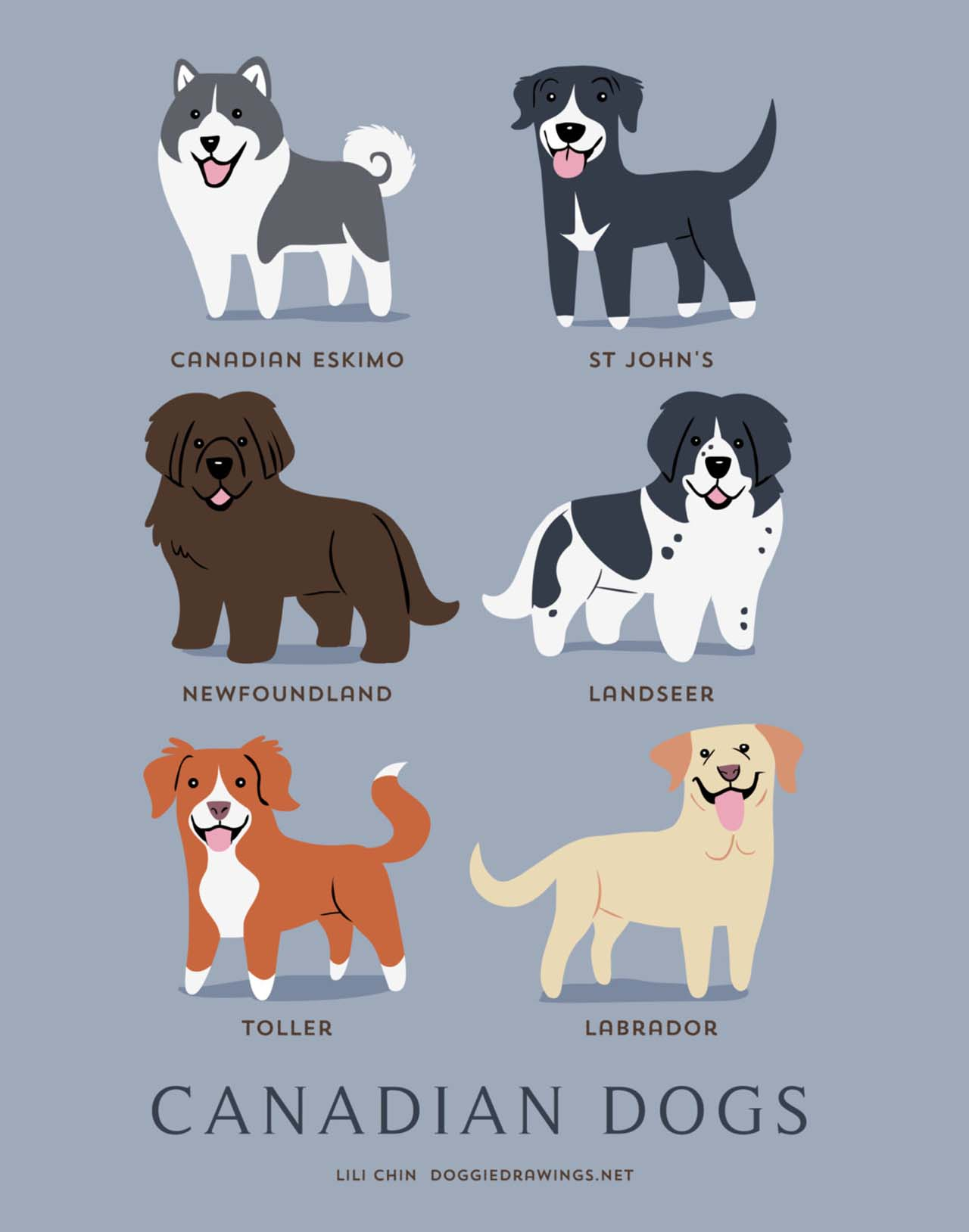 Origin Of Dogs: Cute Illustration By Lili Chin Show Where Dog Breeds Originating From #17: Canadian Dogs