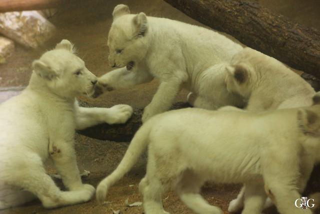 Ausflug Zoo Magdeburg 11.03.17 Teil 1.21