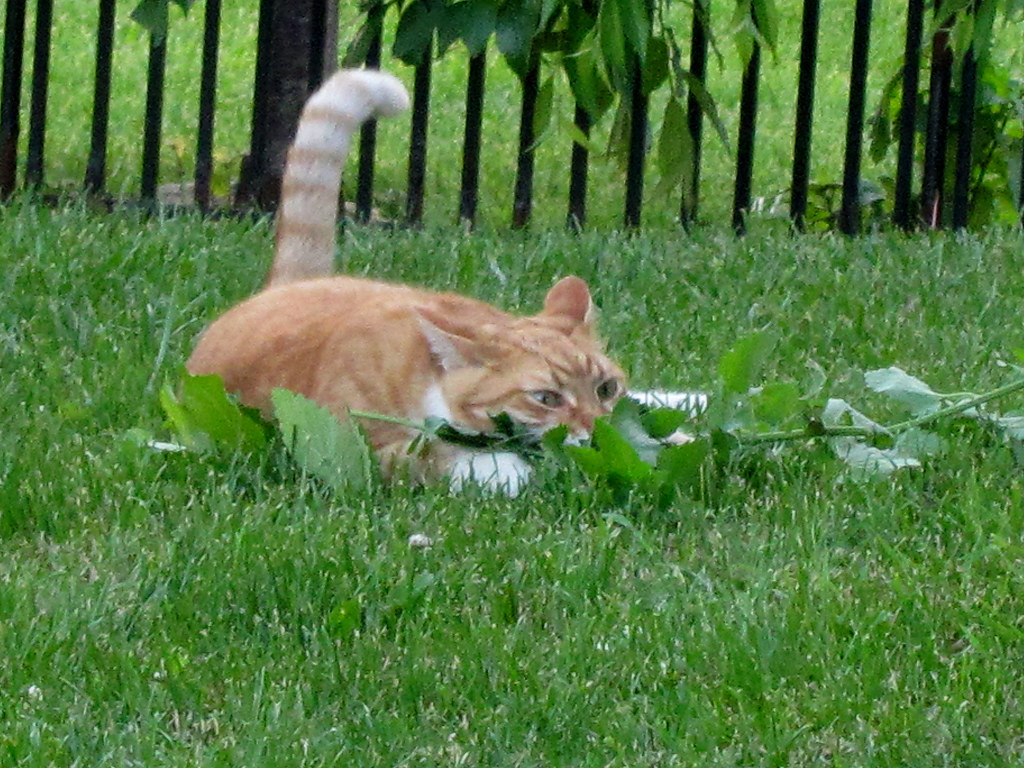 Hous Plants For Cats