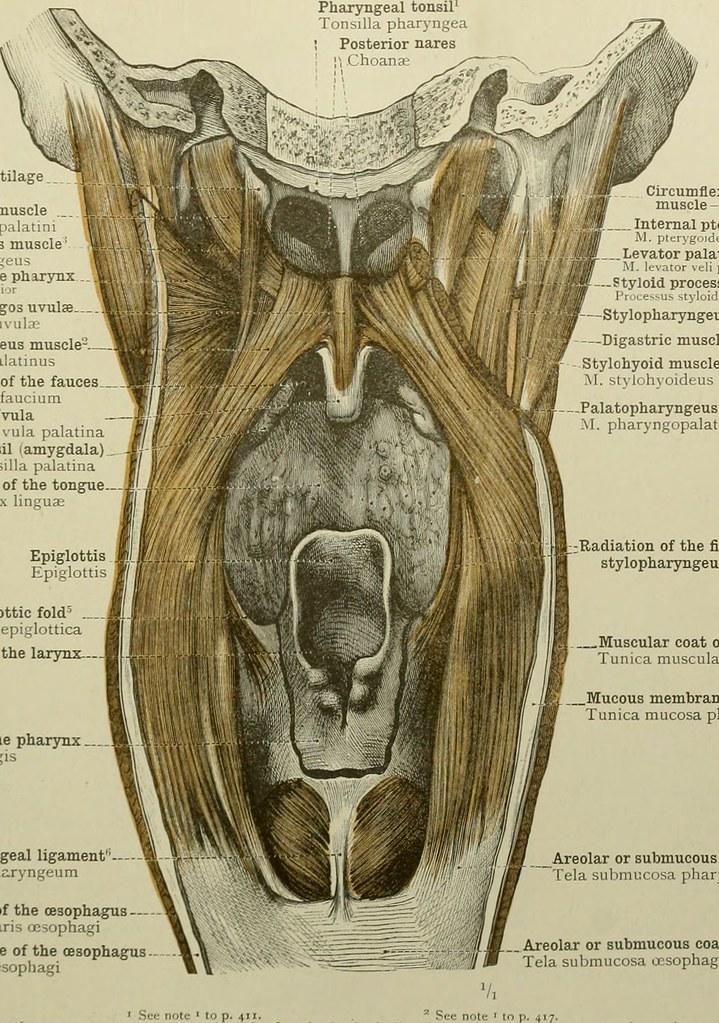 atlas of anatomy gilroy 3rd edition pdf free