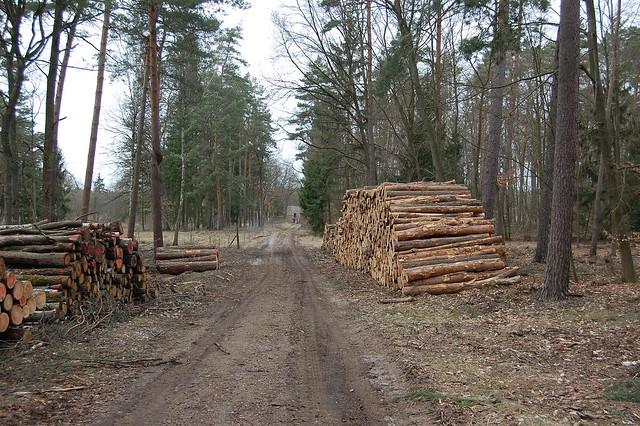 Ein Waldweg mit erdigem Boden, auf beiden Seiten sind Stapel mit 2m langen frisch gesägten Baumstämmen