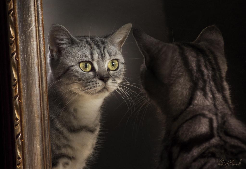 Luisella giolitto visits s favorites flickr - Scimmia che si guarda allo specchio ...