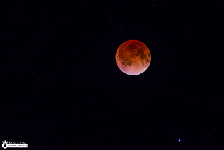 blood moon today in florida - photo #29