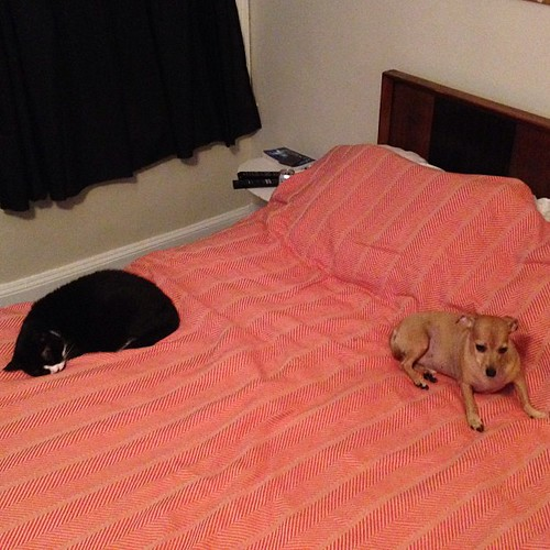 Mass Hysteria Cats And Dogs Living Together