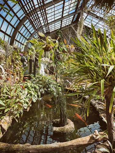 Koi Koi In The Orchid House Lincoln Park Conservatory