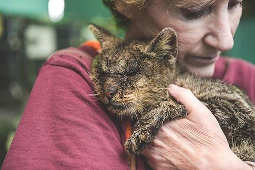untouchable-cat-sarcoptic-mange-hugged-valentino-1-1