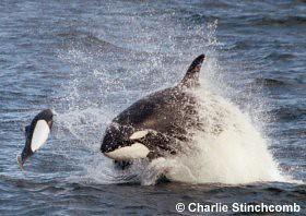 Marine Mammals - Southern California