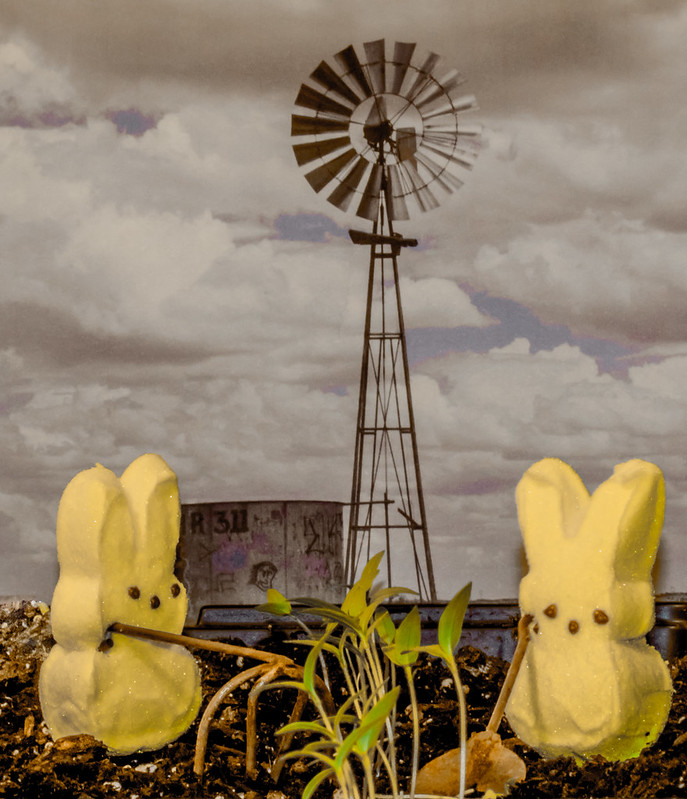 Peep Farmers of the Great Depression