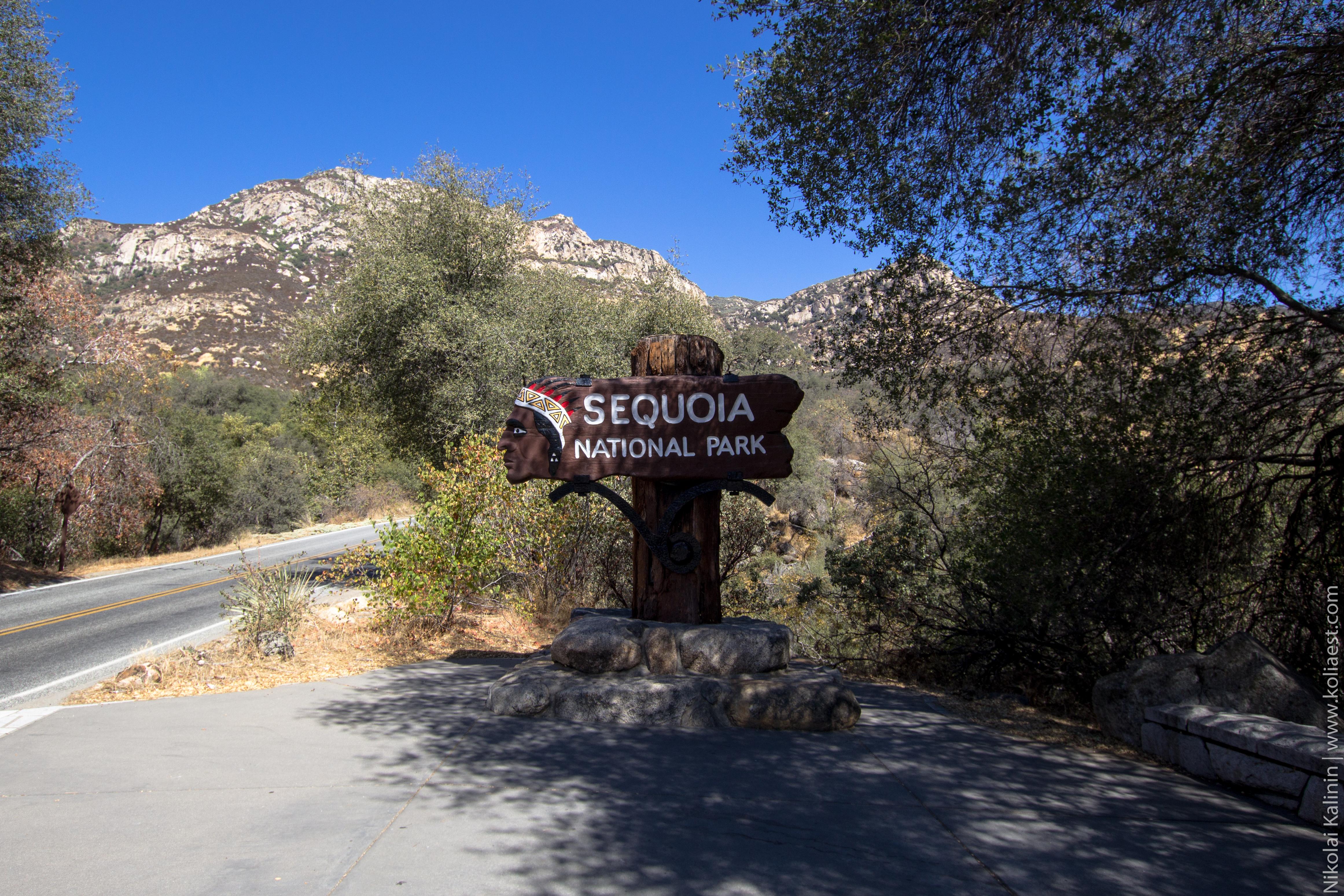 Sequoia-63