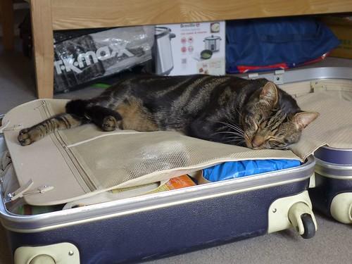 man-mourns-cat-death-finds-stranger-note-1-58bfb47c31b55__880