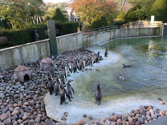 zoo copenhaga 5 obiective turistice copenhaga