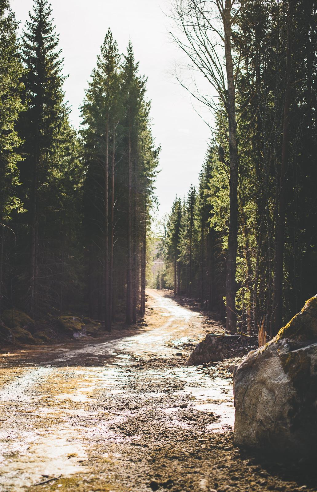 Skogspromenad mars