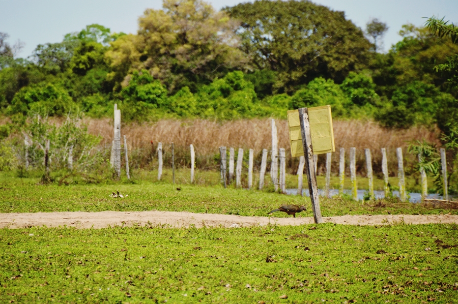 ranchpantanal18