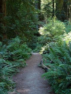086 Wandeling bij Big Tree