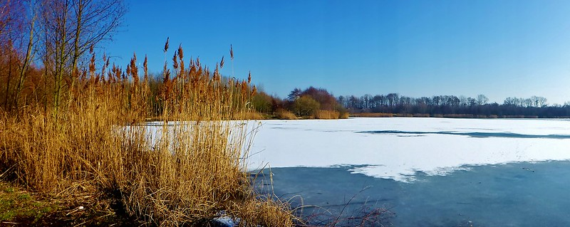 am Waldsee Lauer