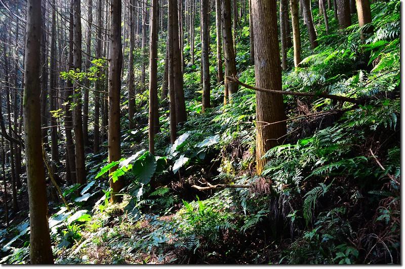 高台山登山步道 3