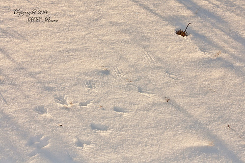 Winter Footprints Near Sunset at Mill Creek Marsh in Secaucus NJ (Meadowlands) | by takegoro