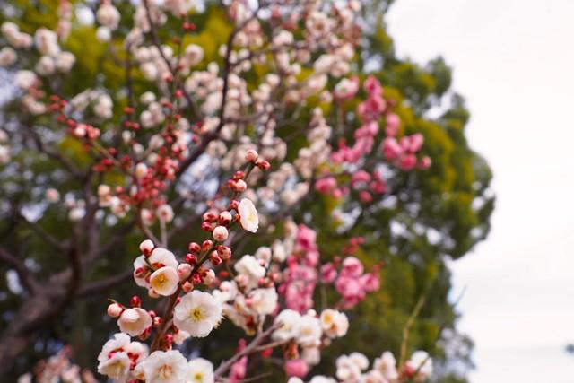 春の始まり。長居公園