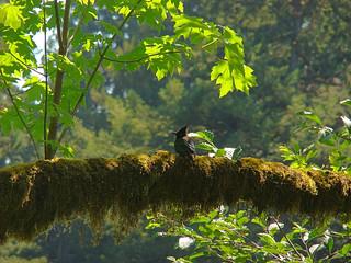 091 Vogels bij Big Tree