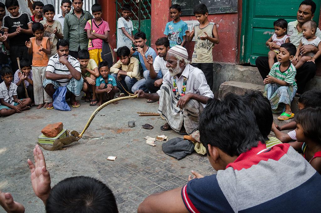Snake vs Mongoose | by SaumalyaGhosh.com