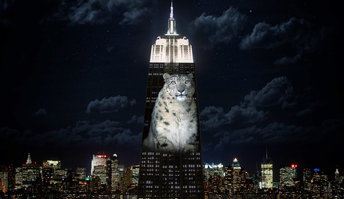 Projection from Racing Extinction.