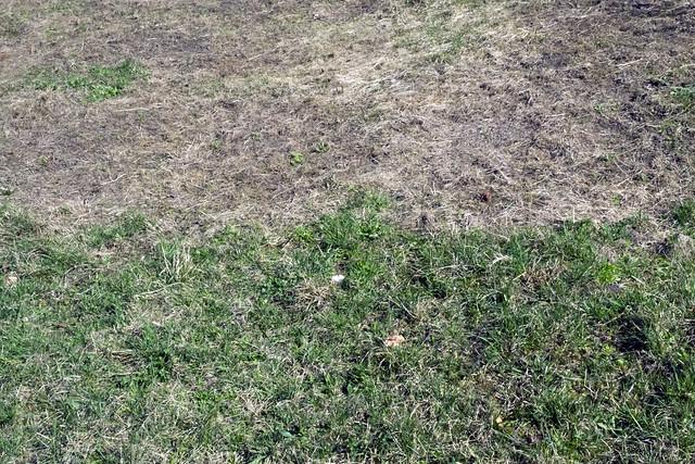 , Green grass, dry grass