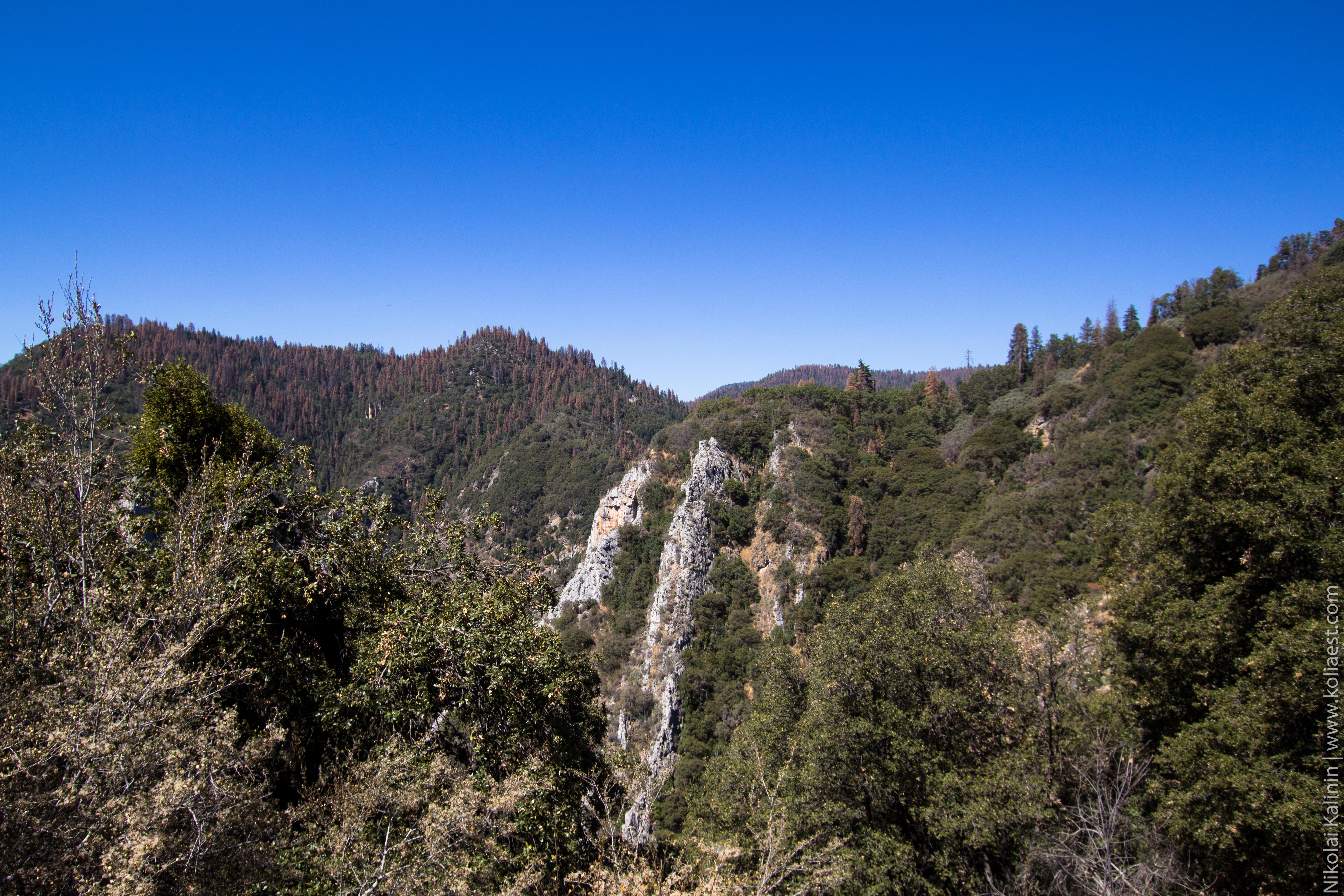 Sequoia-66