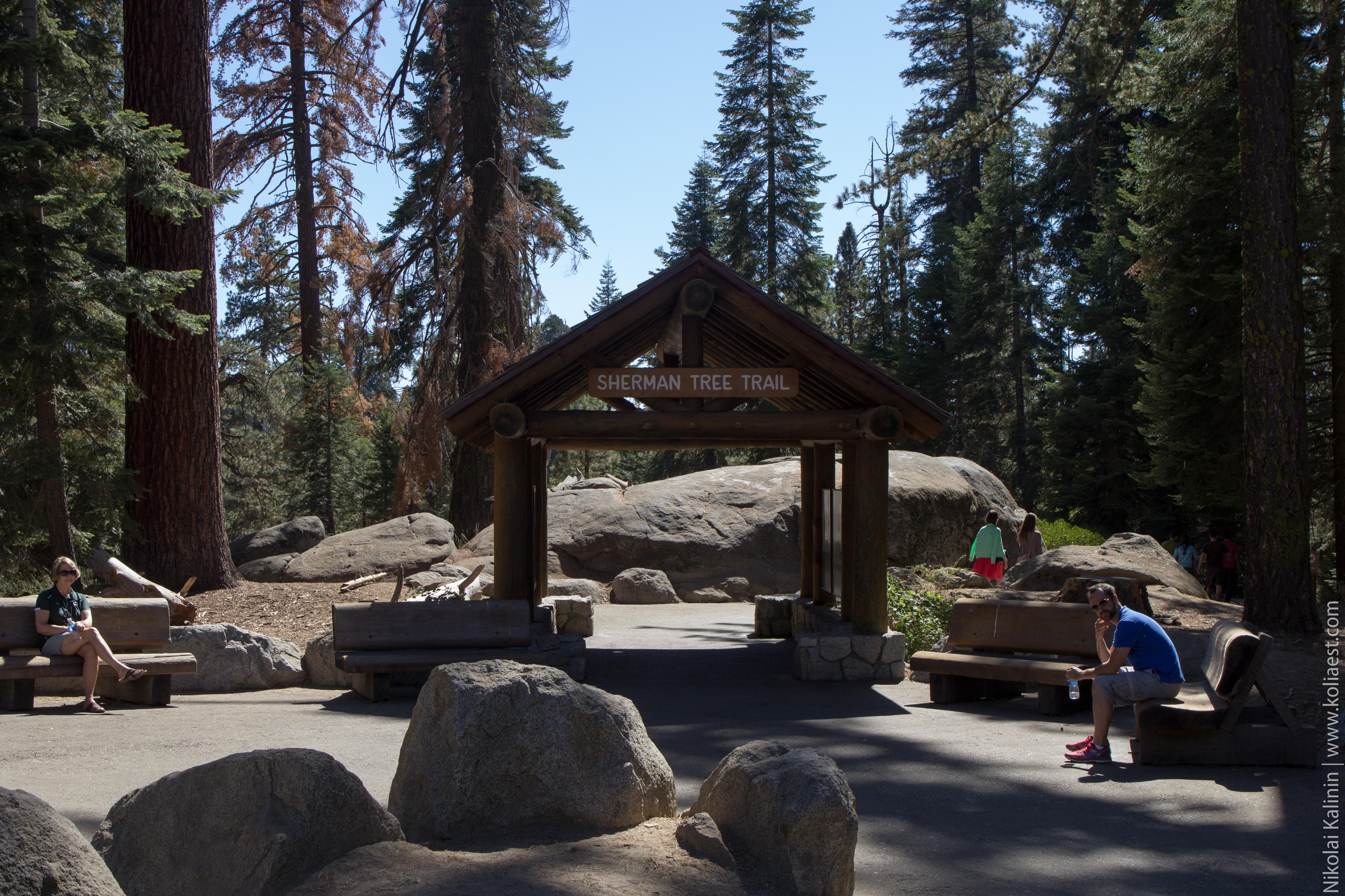 Sequoia-33