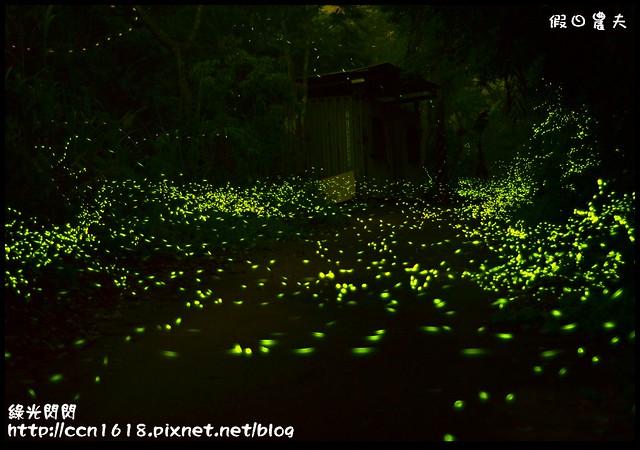 螢火蟲DSC_3749