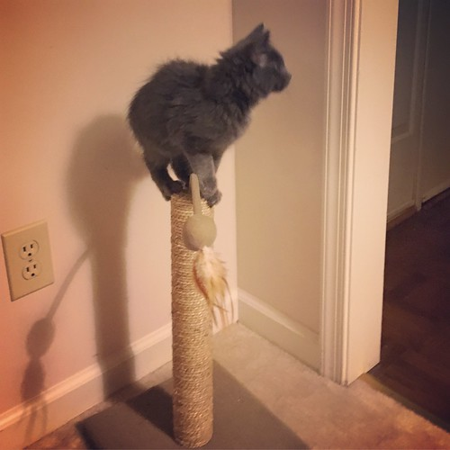 We call her Fifi, Queen of the Scratching Post