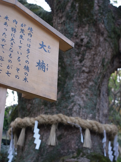 Atsuta Shrine (GXR A12 50mm) 2