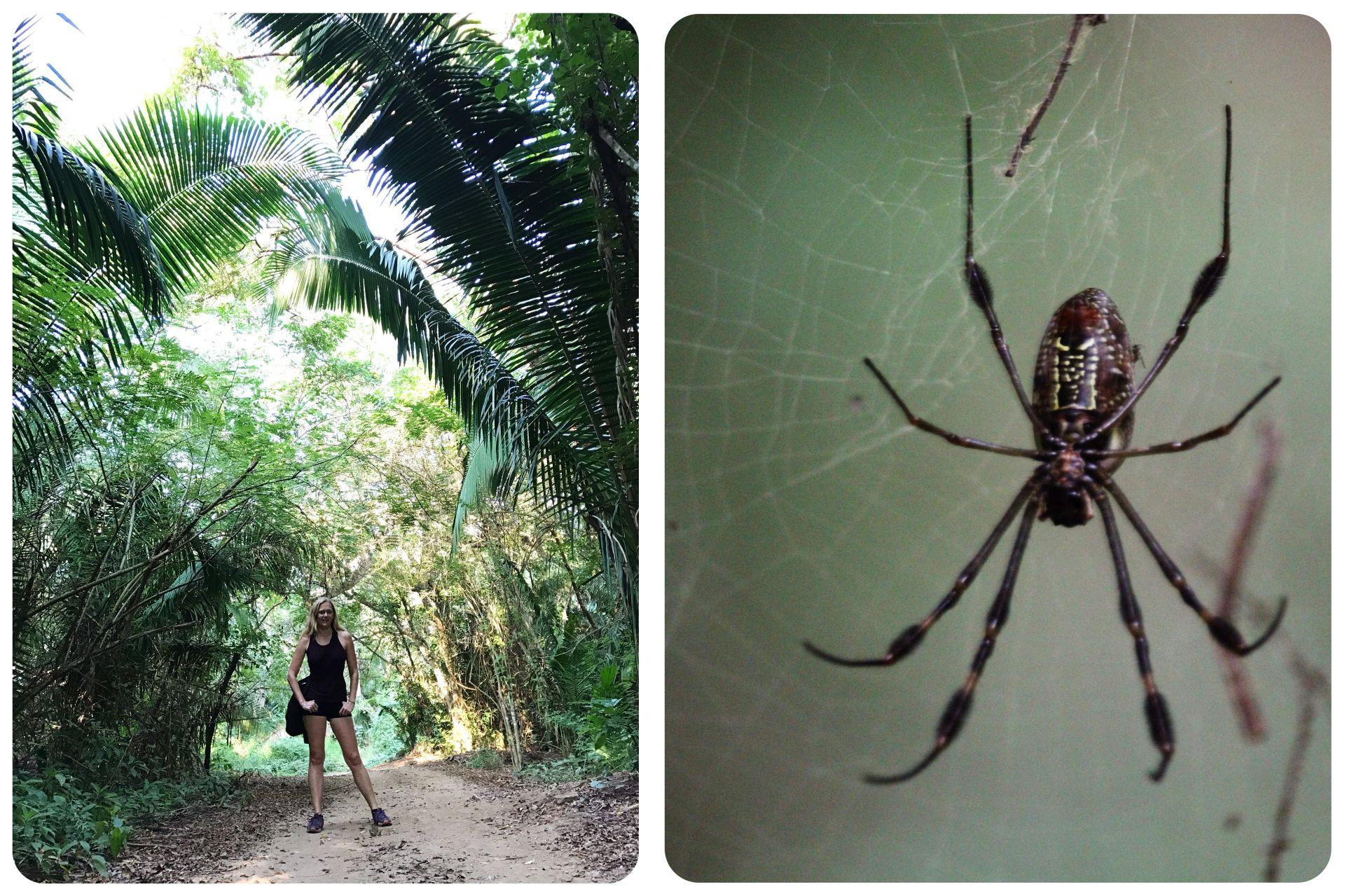 Jungle Hike Mexico