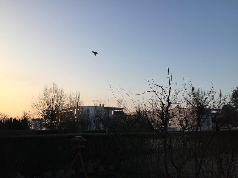 Sunrise in Feldbrunnen