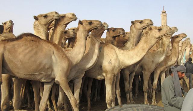 CamelMarket1-04