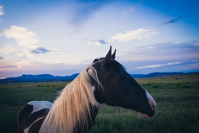 Sunset / Horse
