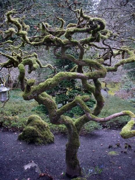 Twisted, moss coated tree