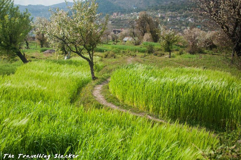 Sidhpur-Zen Valley (21)