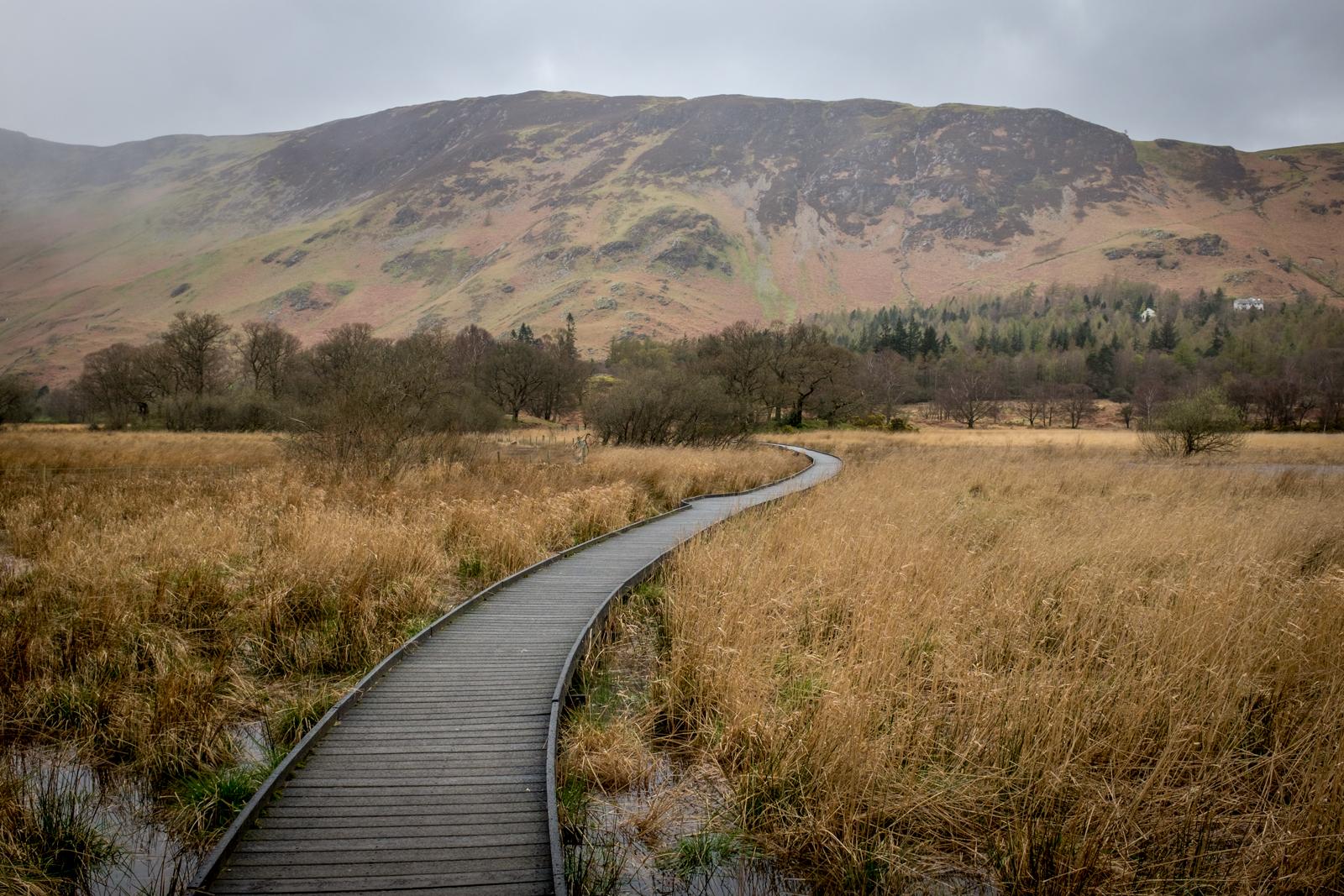 Walkway over wetlands