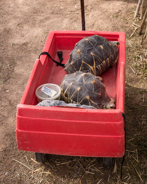 turtle transport