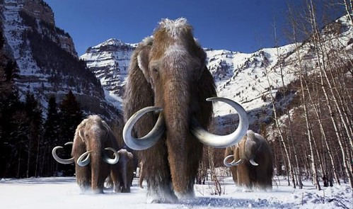 WoollyMammoth-Large(color modified)