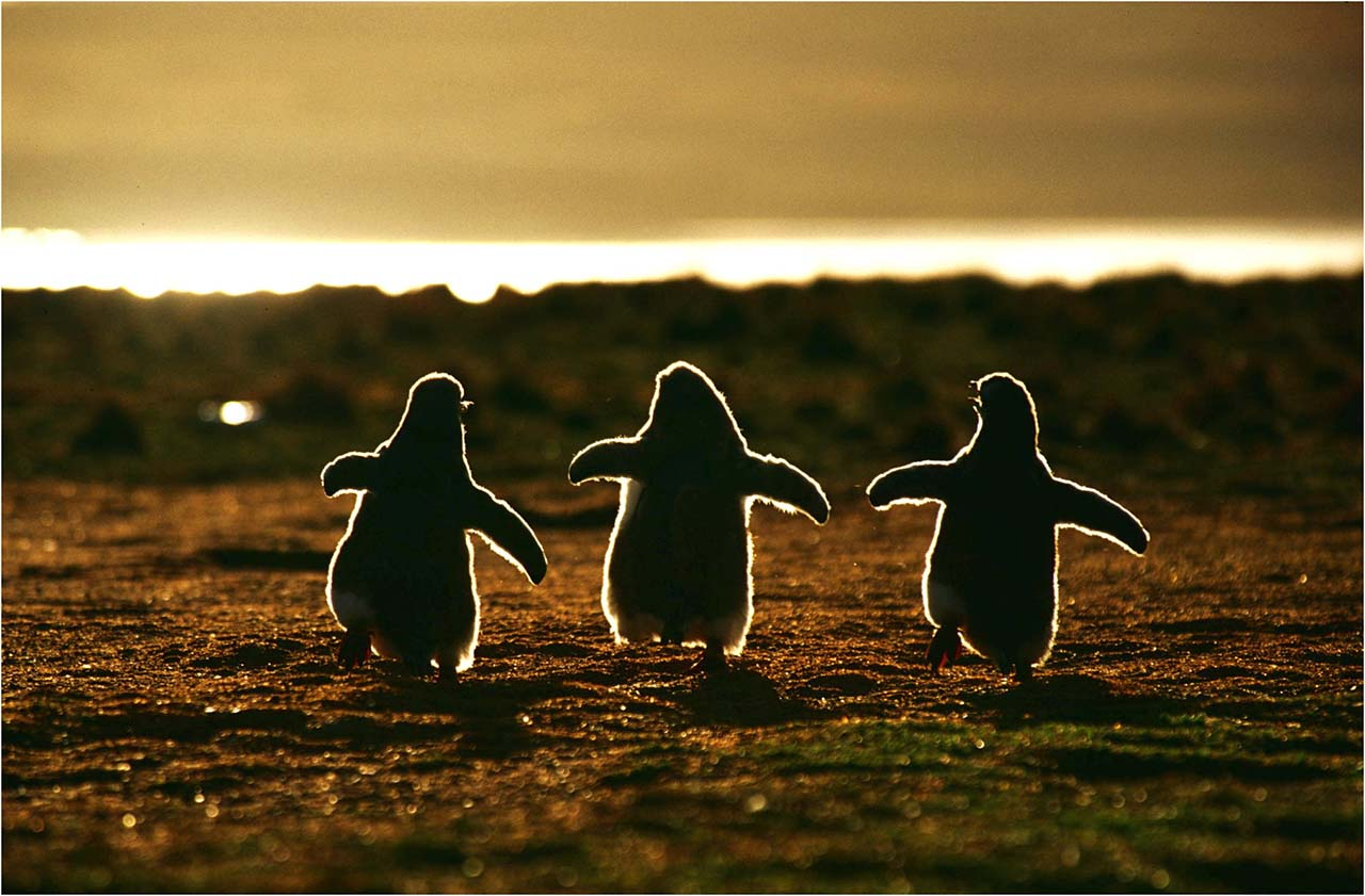 27 Adorable & Tiny Animals That Are Too Cute To Handle #27: Penguin