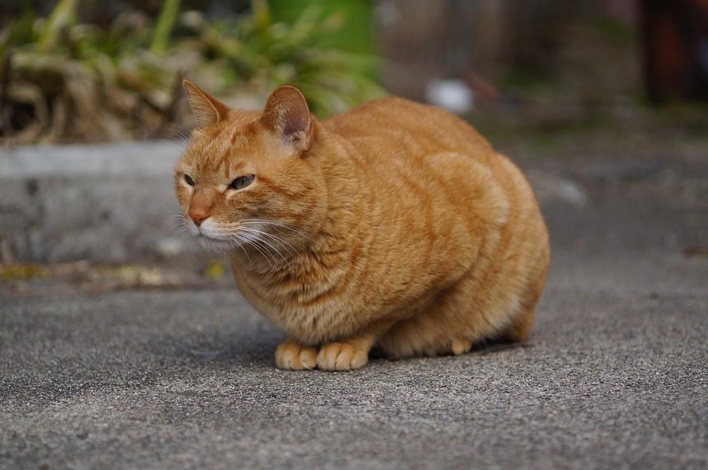 S-Planar × Cats