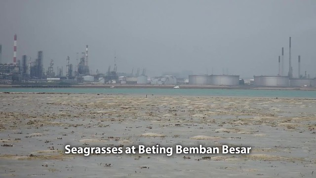 Seagrasses at Beting Bemban Besar