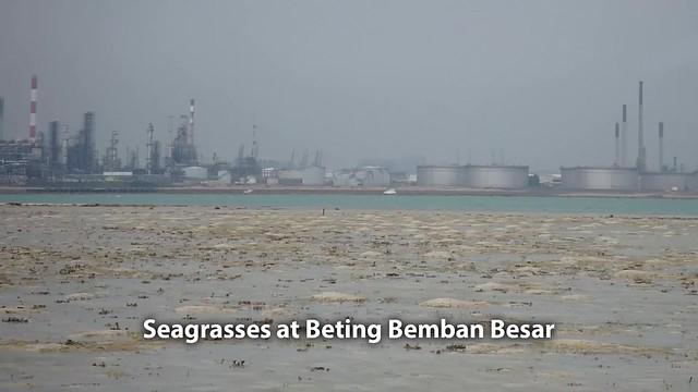 Seagrasses at Beting Bemban Besar
