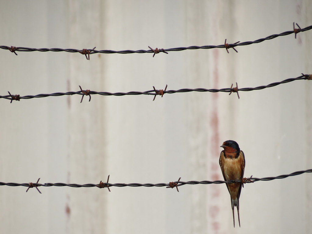 Amazing Barbed Wire Fence Front View Photo - Electrical System Block ...